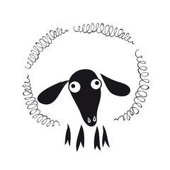 Schaf mit schwarzem Kopf - Rhönschaf
