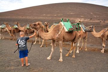 niño con camello