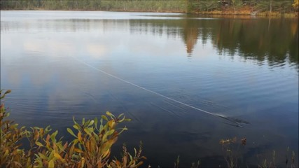 Fighting trout after strike on a flyrod