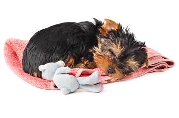 Puppy sleeping on pink towel