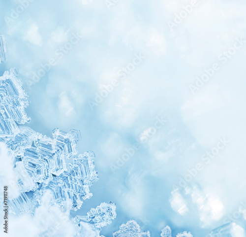 Poster Water planten Winter Fairytale