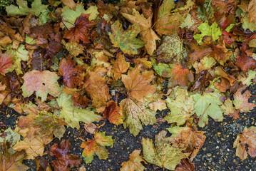 Vivid fallen autumn leaves on alley
