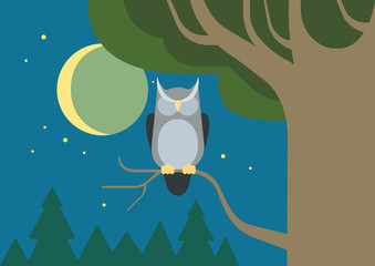 Owl hollow forest habitat flat cartoon vector wild animal bird