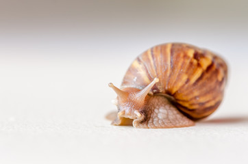 Close-up of snail walking