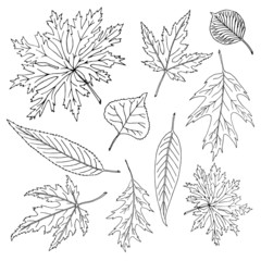 Hand-drawn leaves doodles set