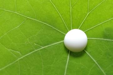 Milchtropfen auf grünem Blatt