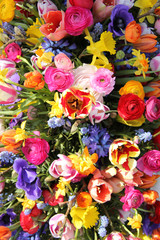 Spring flowers in bright colors