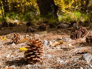 Big pines around