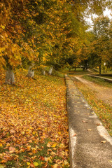 alley strewn with autumn leaves in the autumn park