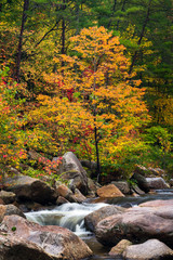 Wilson Creek autumn 11