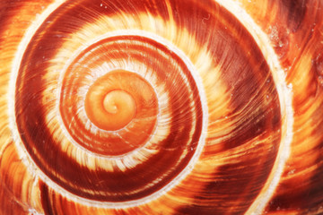 snail shell background