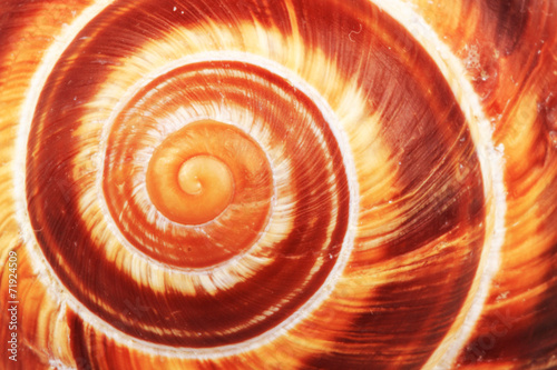 Spoed canvasdoek 2cm dik Textures snail shell background