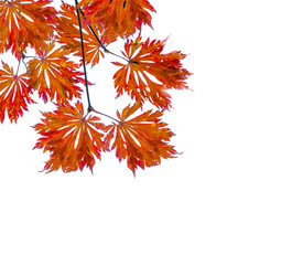 Autumn background with colored leaves, space for text.