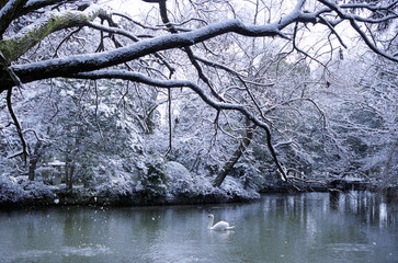 Winter Season at Swan Lake