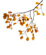 canvas print picture - Yellow autumnal leaves on the tree branch isolated on white