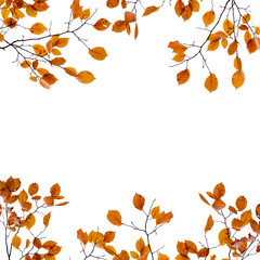 Autumn background frame. Yellow leaves on the branches isolated