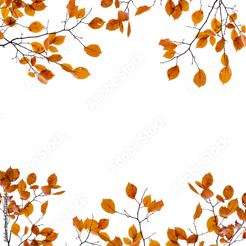 canvas print picture Autumn background frame. Yellow leaves on the branches isolated
