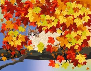 jesienny mały kot,