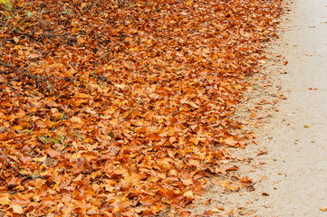 Dry brown beech leaves at road side in autumn.