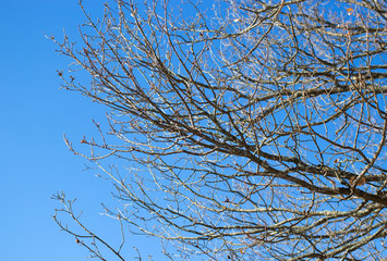 naked tree branches against  sky