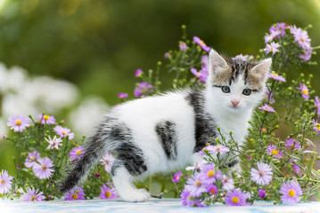 Motley kitten standing on  background of flowers