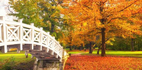 buntes Laub im sonnigen Herbst