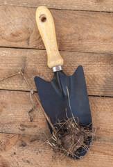 Liatris tuber before planting