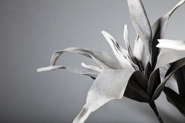 Attractive Solo Flower in Gray Scale