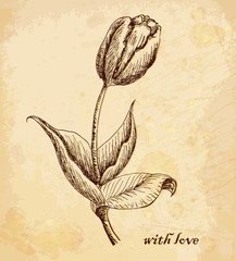 Vintage old background with tulip with love. Hand drawing