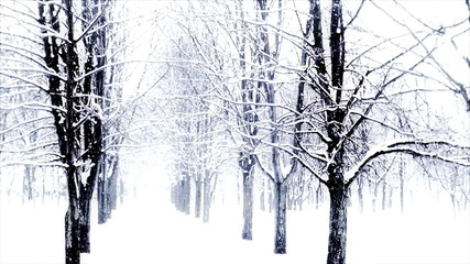 Park with snow covered trees, slow motion.
