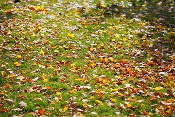 Lawn with yellow leaves