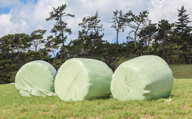 Bales of silage wrapped in white plastic at the green field in s