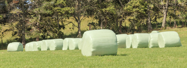 The row of white plastic wrapped silage on green farm in harvest