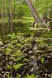 überschwemmtes Grünland