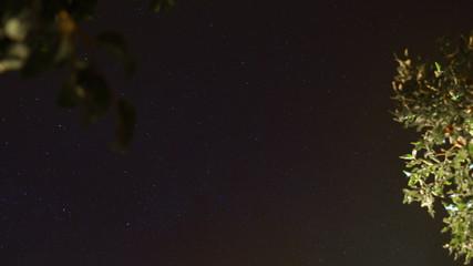 Night sky time lapse and lemon trees