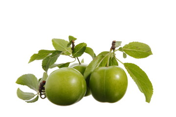 plum/fruit/food