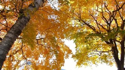 秋の風に揺れる紅葉_14