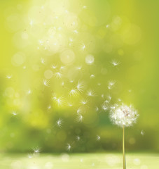 Vector spring background with white dandelion.