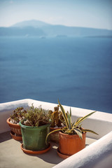 Plants and White architecture of Oia village on Santorini island