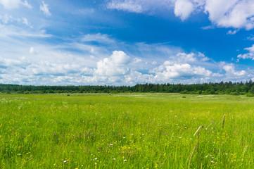 Grass Lawn Nobody Outside