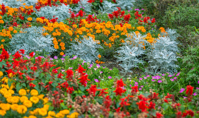 Colorful flower garden in bloom. Selective focus.