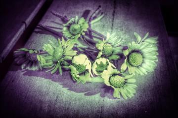Gänseblümchen...Beileidskarte Hintergrund