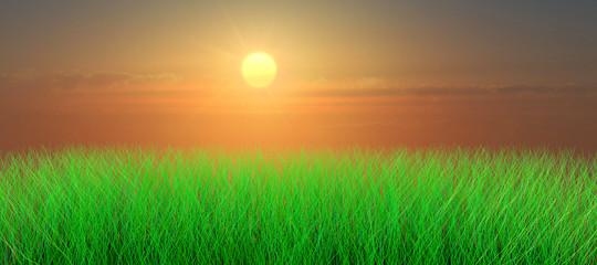 Tramonto su erba, prato