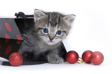 Christmas kitten in a gift bag