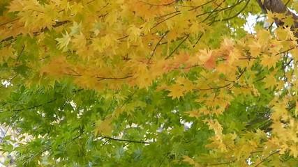 秋の風に揺れる紅葉_9