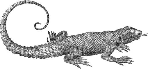 Vintage graphic reptile lizard