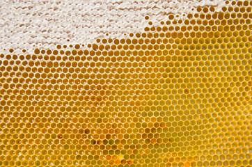 Honeycomb with fresh honey