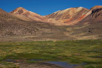 Wetland in the Atacama