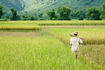 Country landscapes in Vietnam