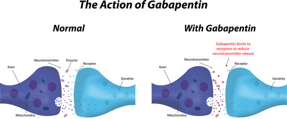 The Action of Gabapentin